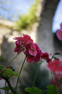 flowersilence